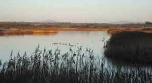 The Wexford Slobs and Wildfowl Reserve