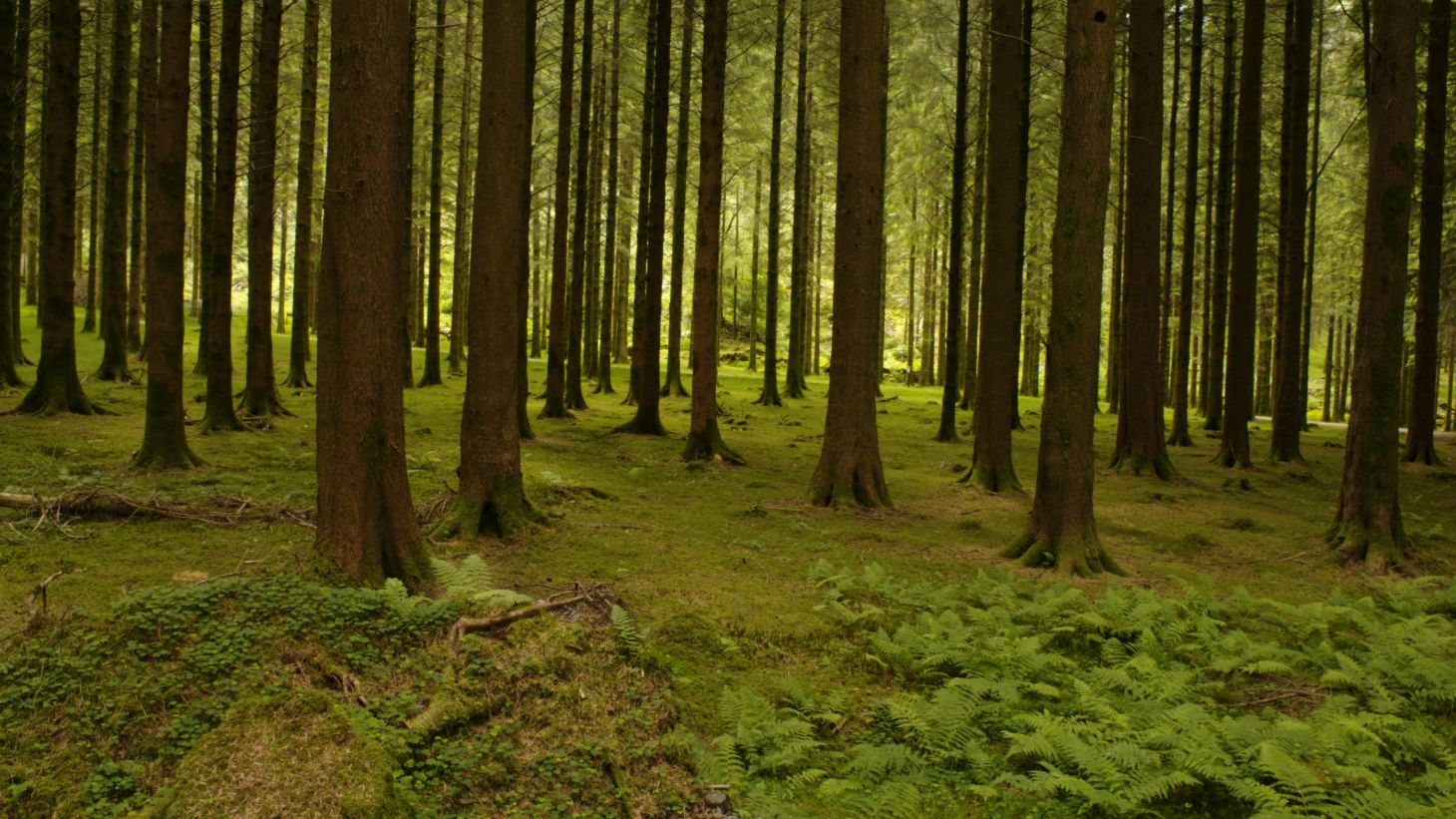 Discover the rocky mountains and forested valleys ofGouganeBarra Forest Park.