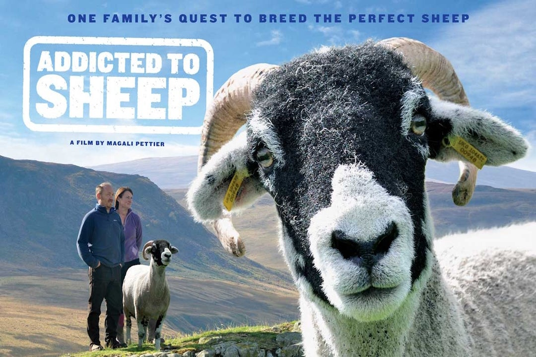 Project BAA BAA - Palas Sheep Film Series