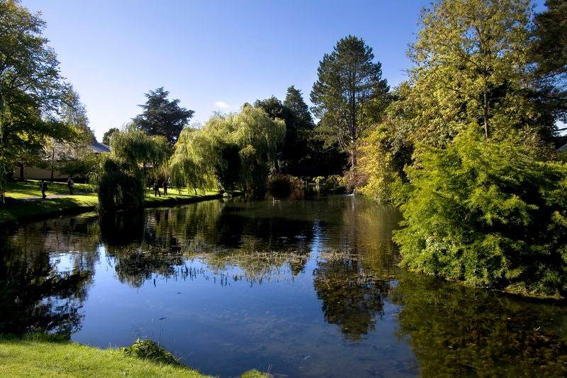 Take a visit to Kildare's Irish National Stud and Japanese Gardens.