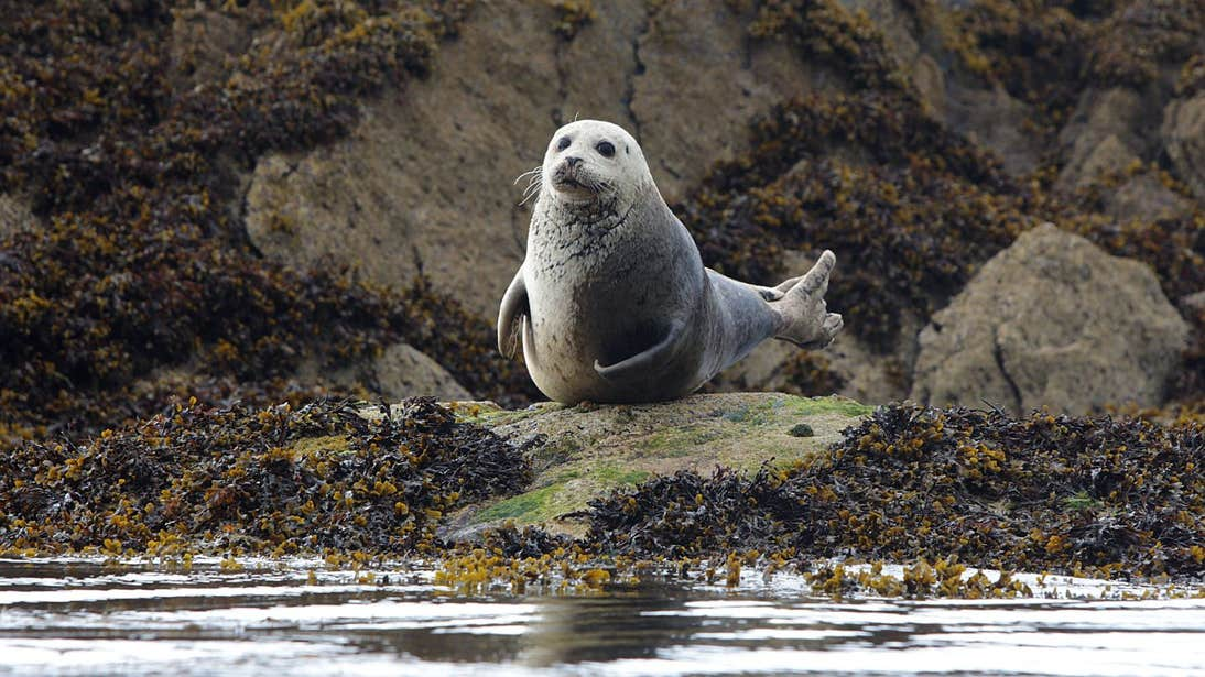 Seal sitting on a rock in Castlecove, Kerry