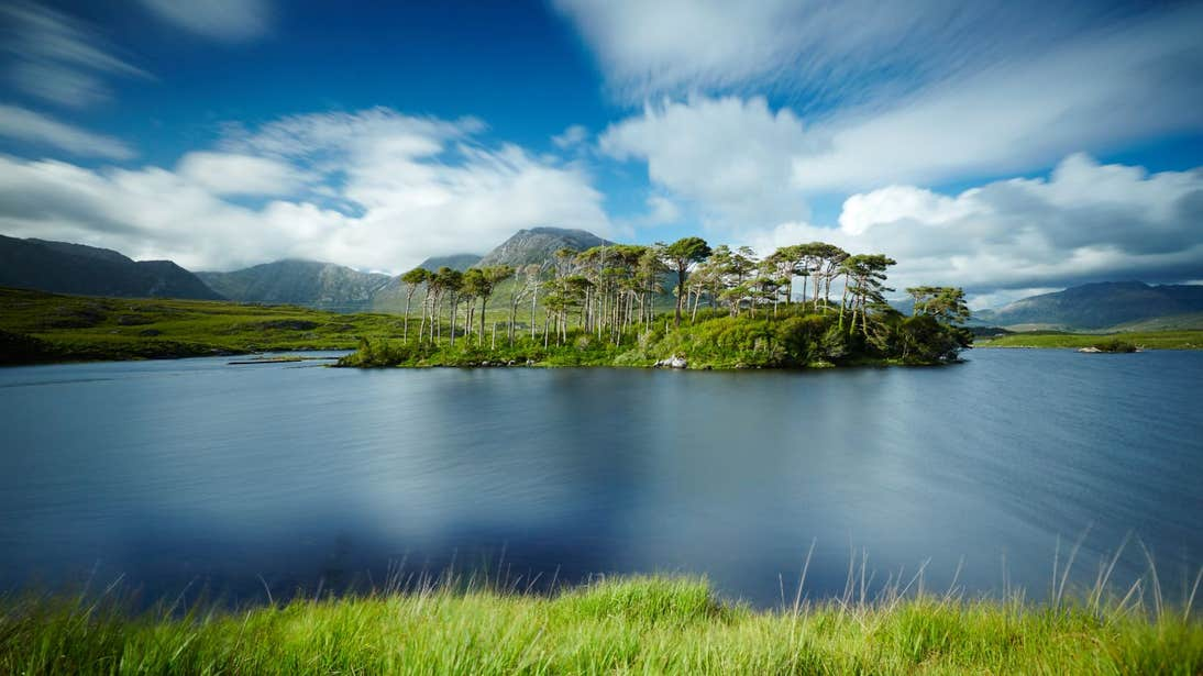 Water surrounding trees at Pine Island, Derryclare, Galway