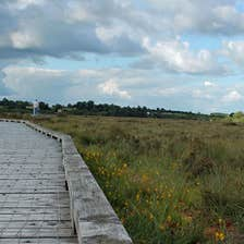 The boardwalk in Clara Bog showing a man walking the path in the distance