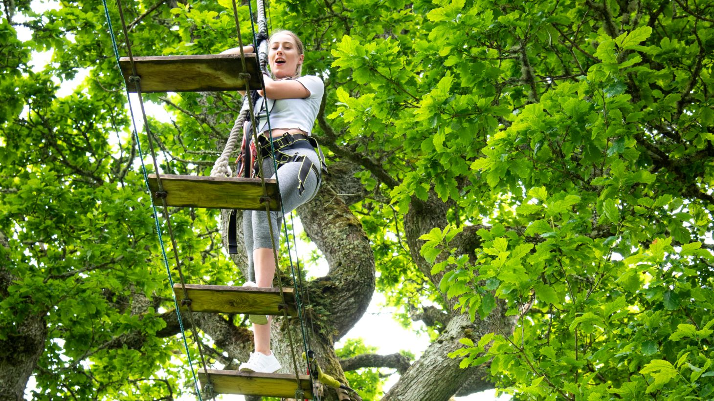 Take to the treetops in Lough Key for an adventurous day out.