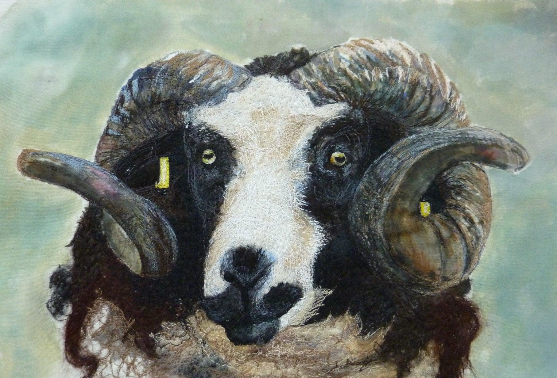 Sheep Breeds Wool Portraits - Project BAA BAA