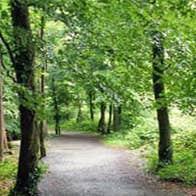 Rath Wood Forest Walks