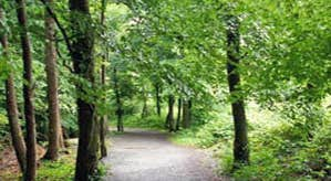 Rathwood Forest Walks