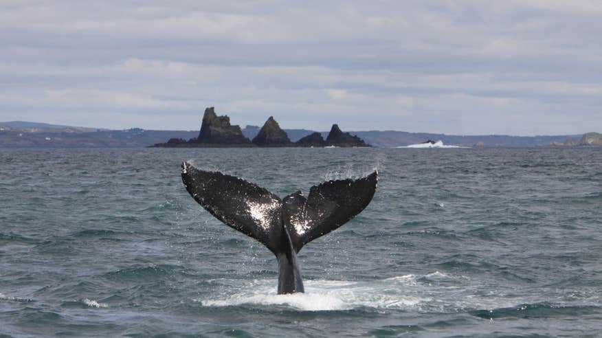 Spot whales in West Cork.