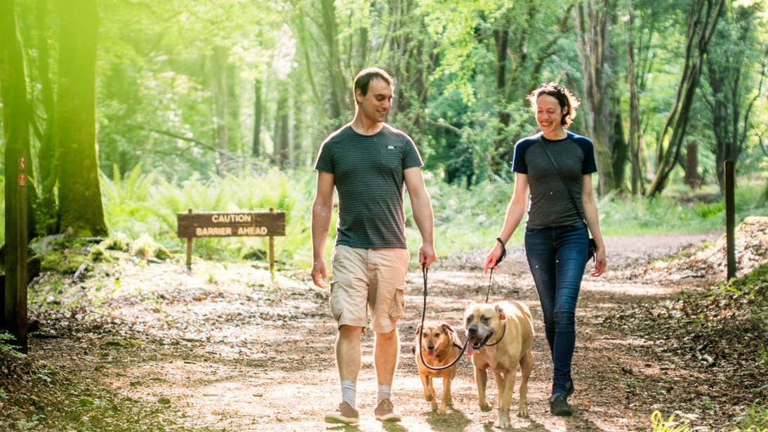 Two people walking two dogs in Portumna Forest Park