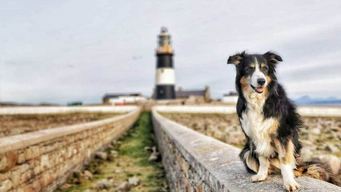 Dog sitting in front of Tory Island Lighthouse, Donegal