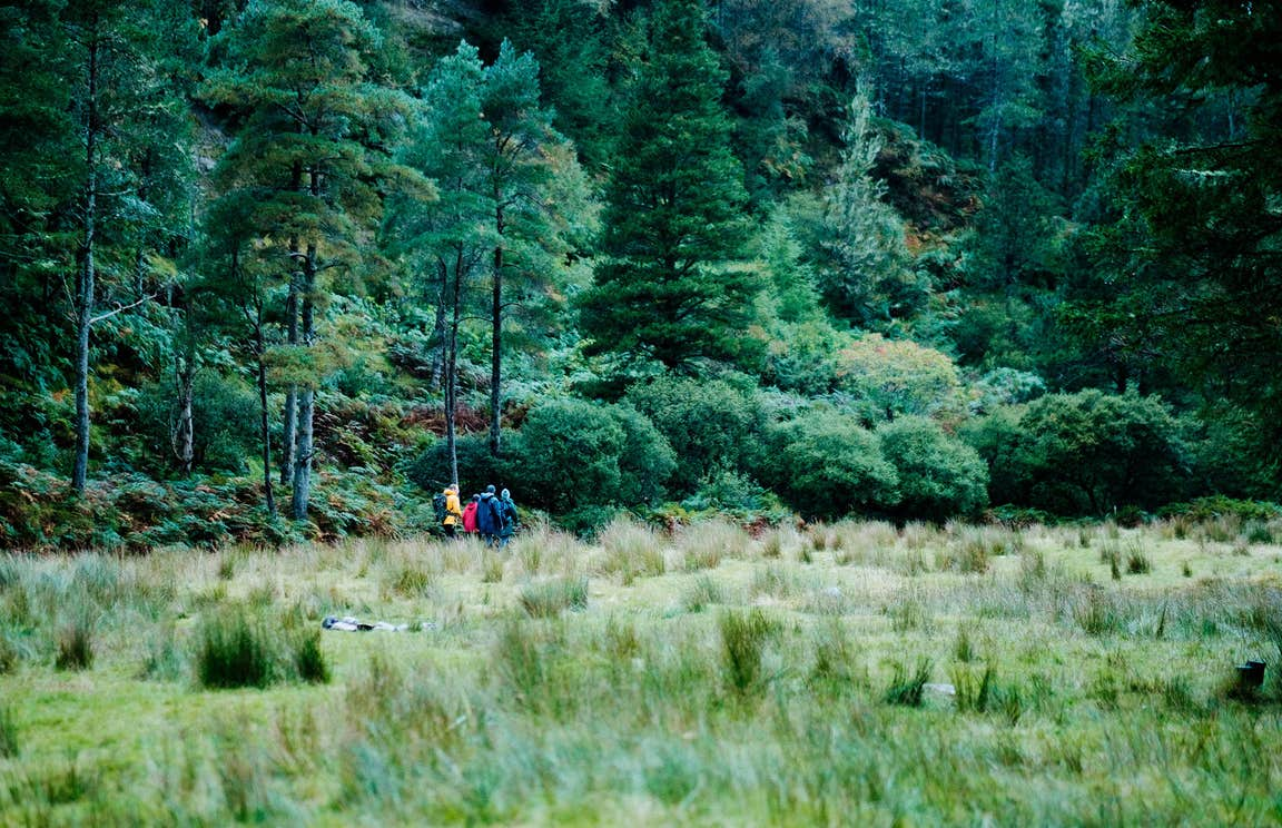 People walking through a forest of towering green trees