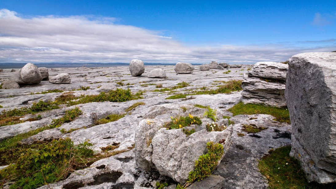 Large boulders and bright flower at The Burren, Clare