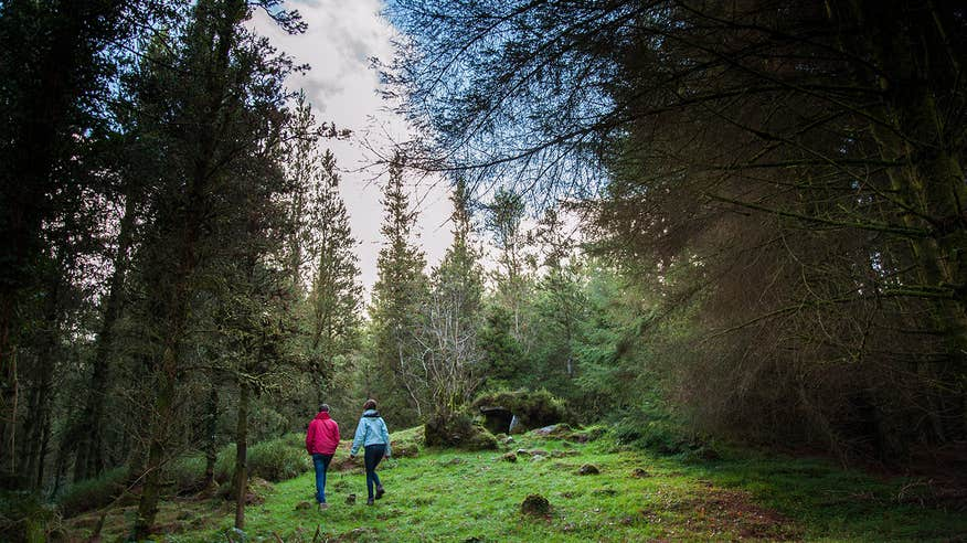 Explore the prehistoric landscape of Cavan Burren Park.