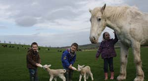 Kids feeding goats and petting a pony on Newgrange Open Farm in County Meath.