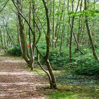 Fairy trail walk way