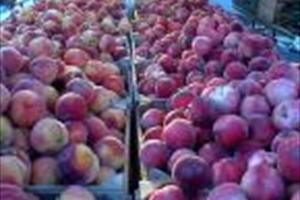 Skerries Mills Farmers Market