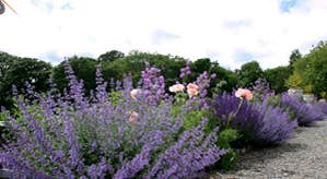 Gardens at Castle Durrow