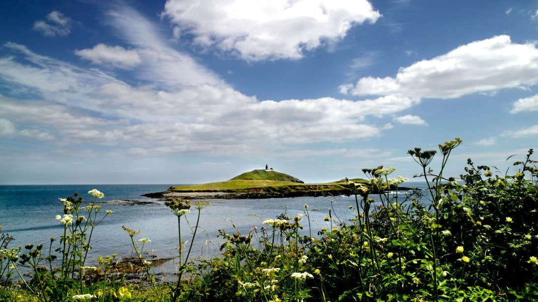 A view of flowers and blue skies with Ballycotton Island in the distance