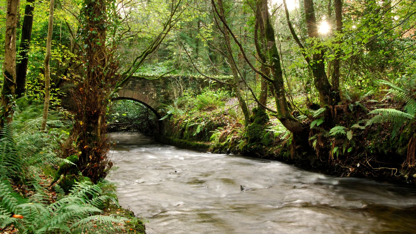 The enchanting  DúnnaRíForest Park.