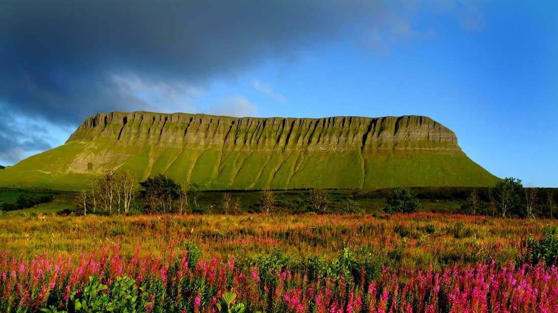 Colourful flowers dotted around Benbulben (Benbulbin), County Sligo