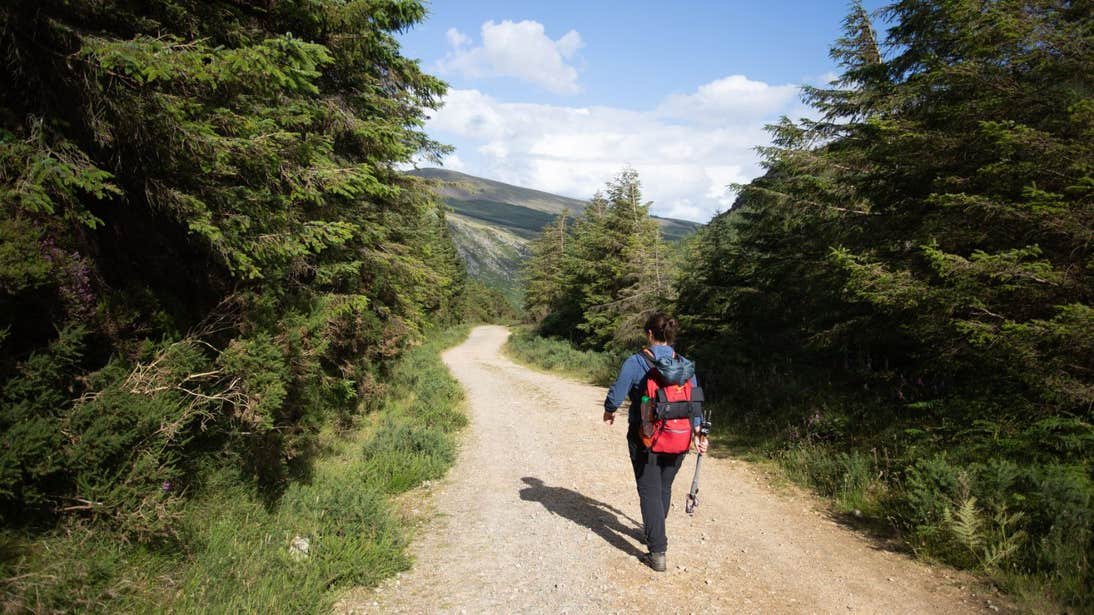 A person dressed in hiking gear walking down a country laneway lined with trees