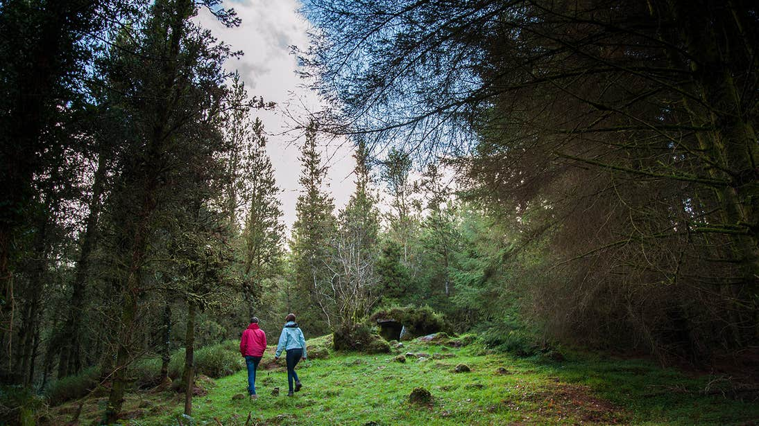 People walking through a forest in Cavan Burren Park, County Cavan