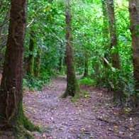Image of Kilbrittain Trails Rathclaren Walk