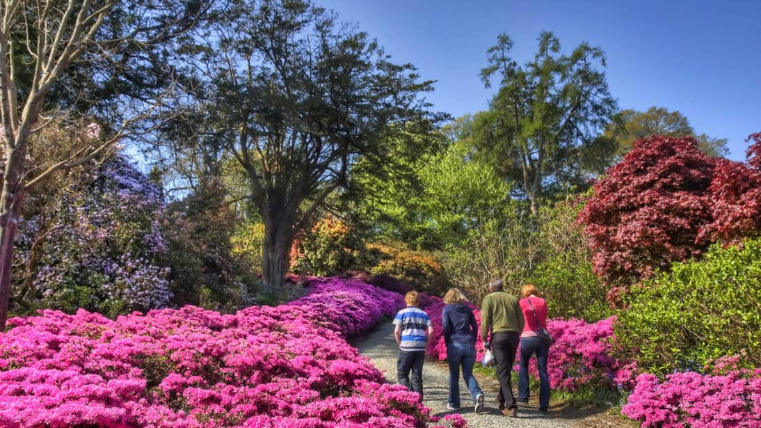 A family walking past bright pink flowers in Mount Congreve Gardens, Co. Waterford