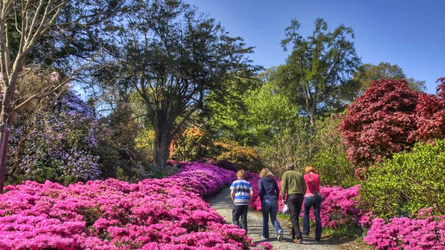 Admire the stunning gardens at Mount Congreve Estate.