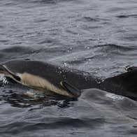 Blasket Islands Eco Marine Tours