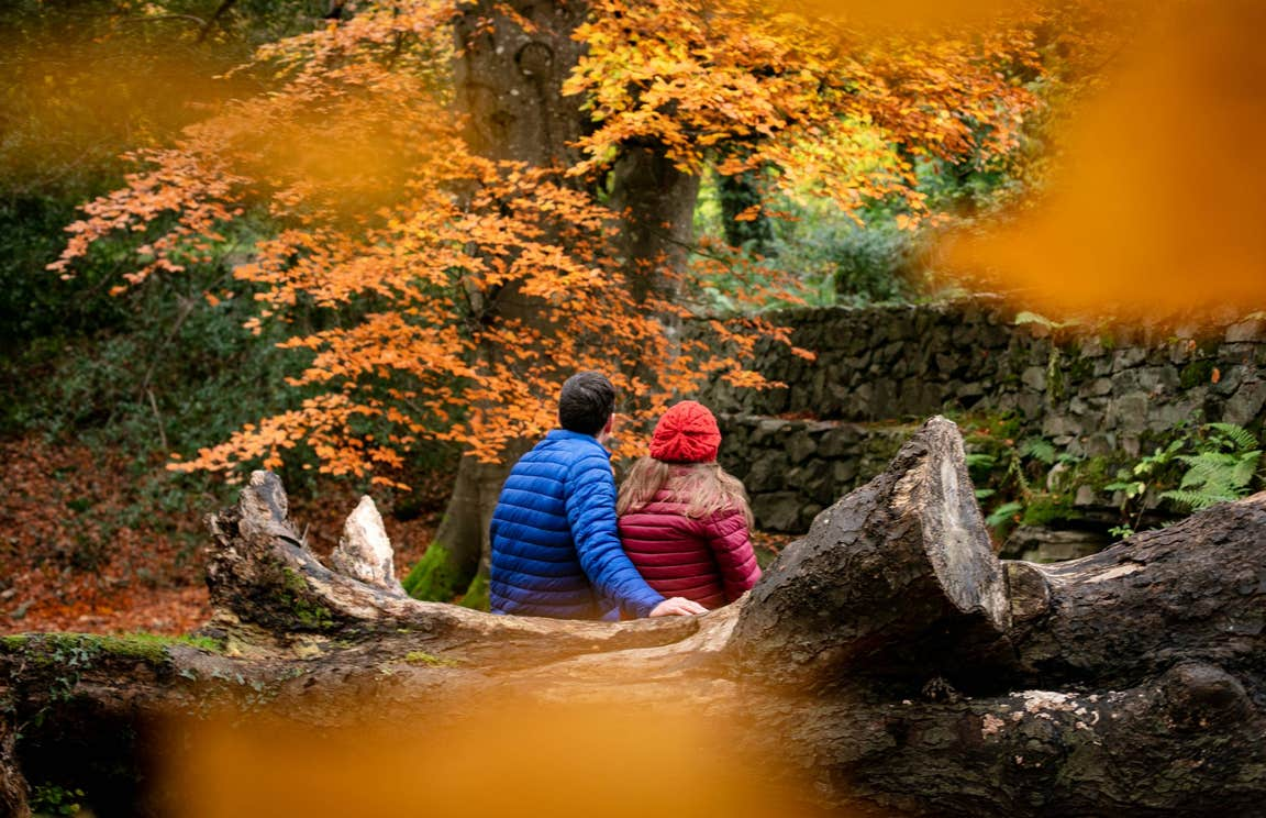 Two people sitting on a fallen tree trunk looking at the autumnal leaves on the trees