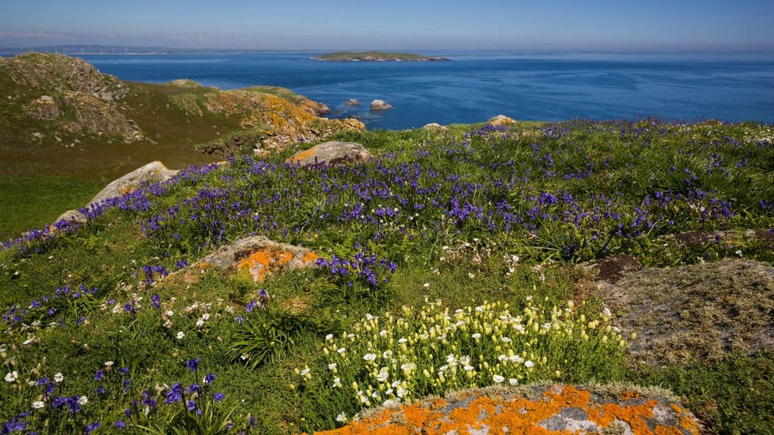 Flowers blooming on cliffs beside the sea on the Saltee Islands