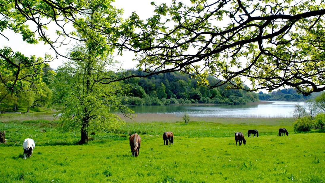 A group of horses grazing on grass near a lake at Castle Leslie, Monaghan