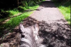 The Paddocks Riding Centre