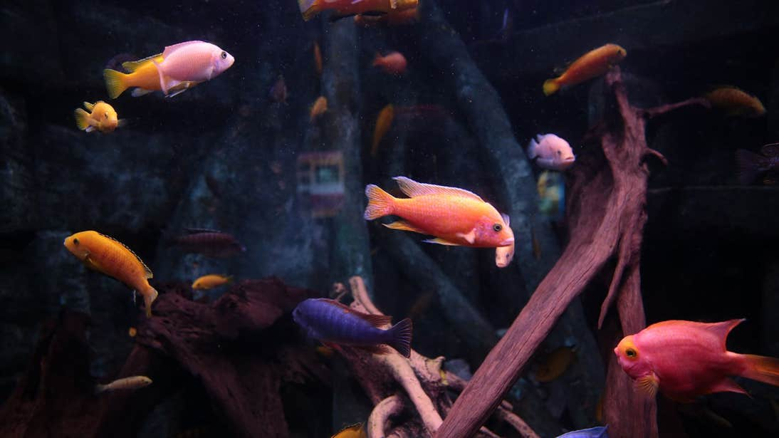 Colourful fish swimming in a tank in Dingle Oceanworld, Kerry