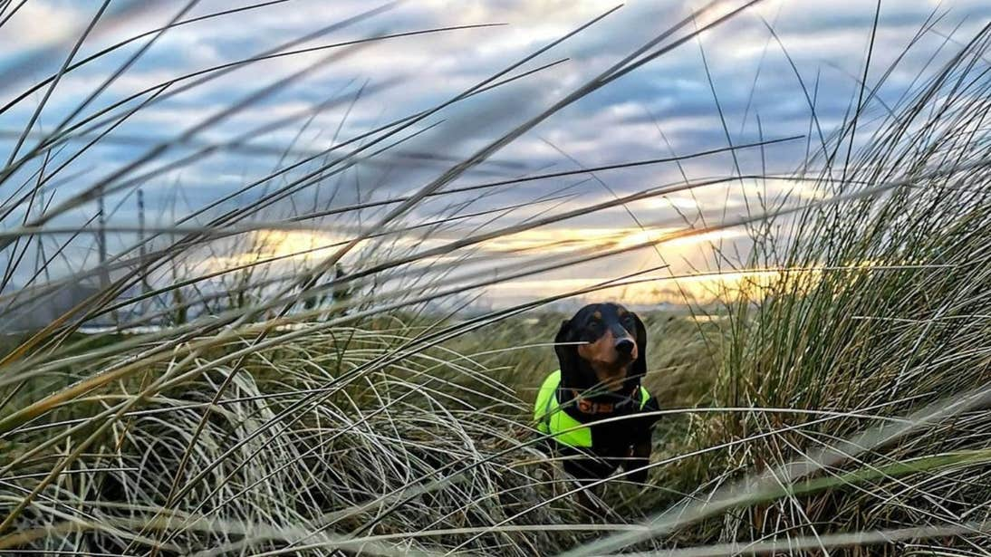 Dog standing in the grass at Dollymount Beach, Dublin