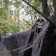 Halloween Spooky Woodlands Tramore