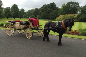 Bernard Fagan Horse Drawn Carriages