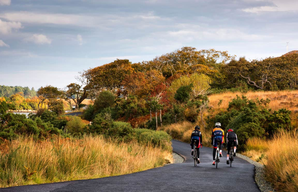 Three cyclists on bikes in Glenveagh National Park on a track lined with trees