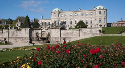 Red and yellow roses on a lawn outside Powerscourt House and Gardens