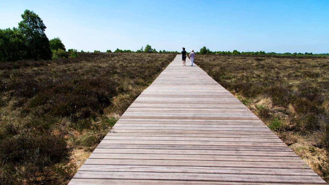 Two people walking on a wooden path on a sunny day at Corlea Trackway in Longford