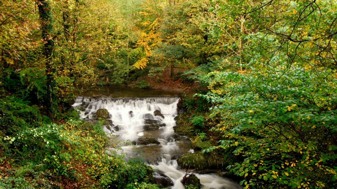 A waterfall and leafy trees in Dún na Rí Forest Park, Co. Cavan