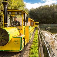 The yellow Rathwood Express train with driver parked beside a pond with geese nearby