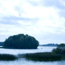 An island and reeds in Lough Ennell in Mullingar in County Westmeath