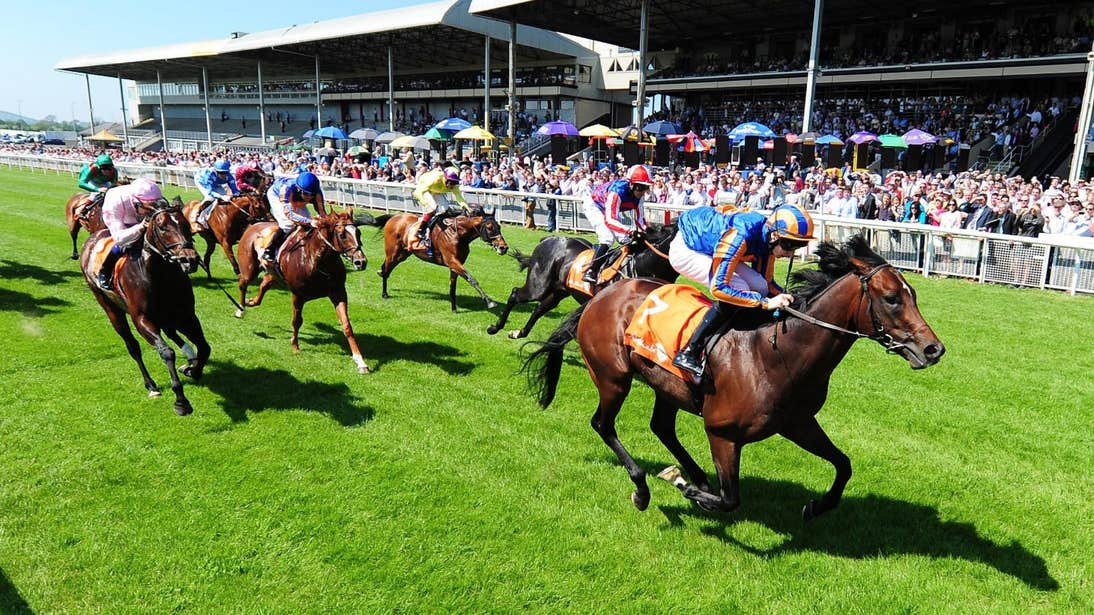 Group of horses and jockeys racing on a grass course