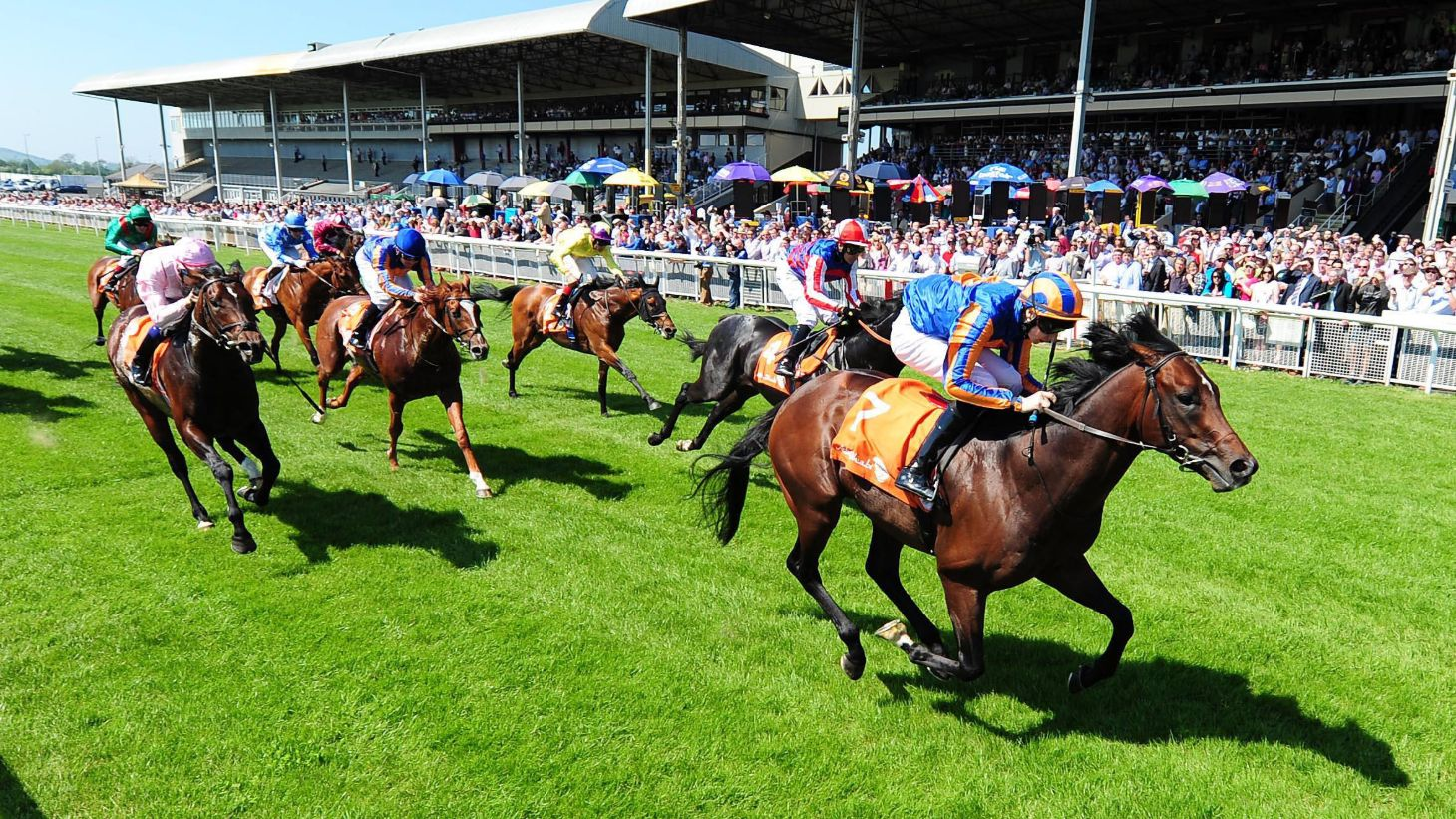 Feel the excitement of horse racing at The Curragh