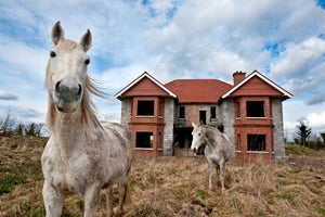 Reined In: Photographs from Irish Horse