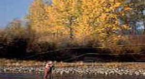 Dun na Rí Forest Park