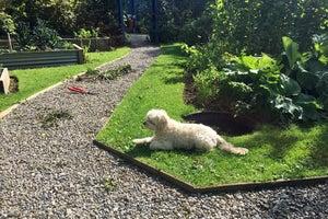 Mornington Garden