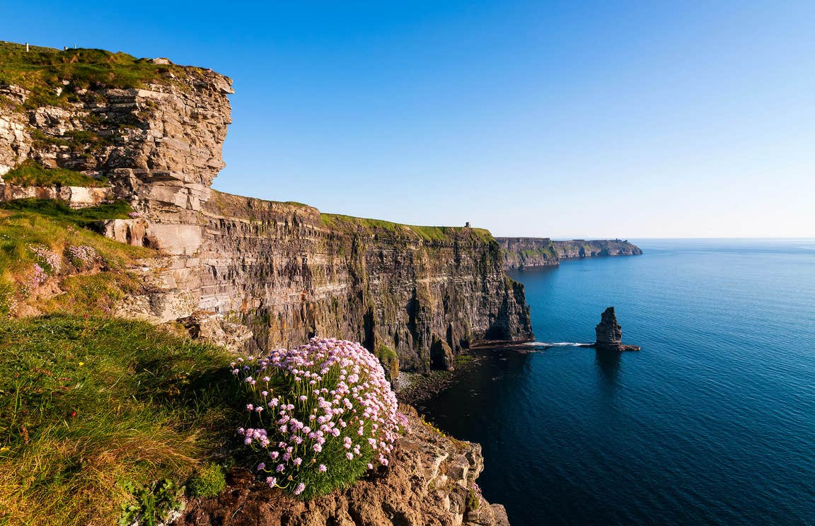 Flowers and grass on the edge of the Cliffs of Moher in  County Clare